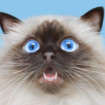50 vérités que les chiens et les chats aimeraient vous dire