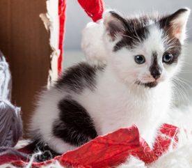 4. Les chats sont différents.