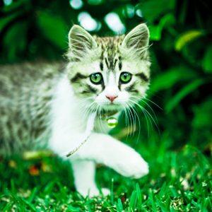 3. Offrez un motte de gazon pour votre chat