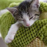 Premiers soins pour félin orphelin
