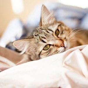 5. Des chats thérapeutes