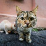 13 comportements des chats que vous ignorez encore