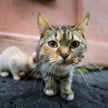 13 comportements du chat que vous ignorez encore