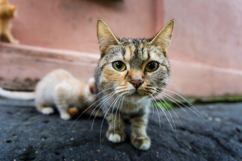1. Les chats ne vous regardent pas toujours dans les yeux
