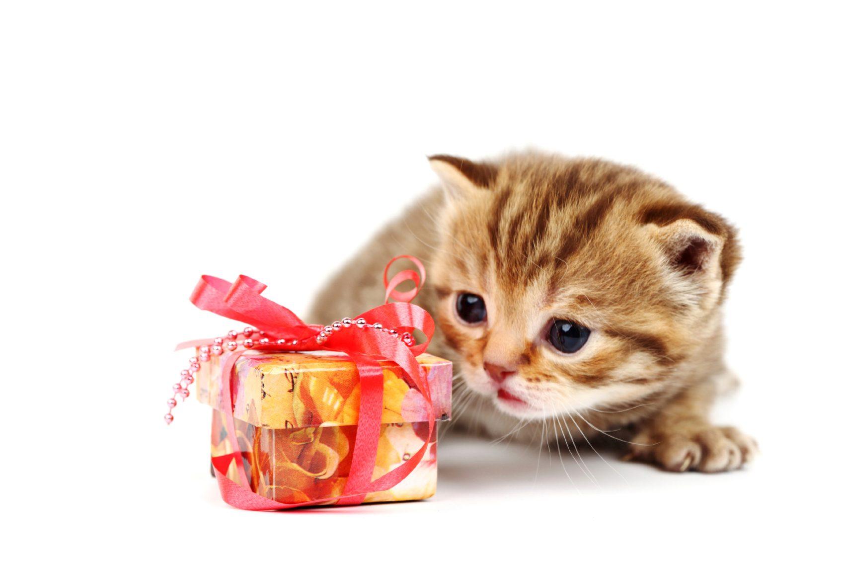 7. Les chats ont besoin d'être récompensés