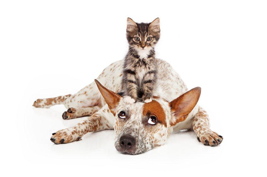 Dites-moi quel animal vous préférez, et je vous dirai qui vous êtes!