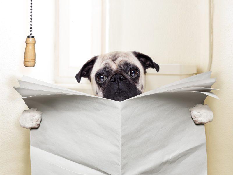 En tant que chien, je n'apprécie pas être pressé quand je fais mes besoins!