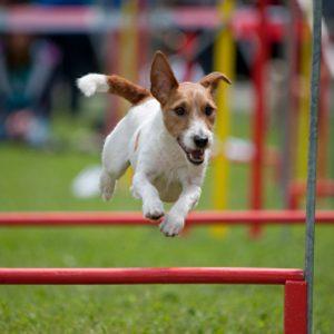 6.Respectez le rythme de votre chien
