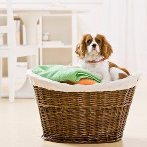 1. Éliminez les odeurs du tapis avec du bicarbonate de soude