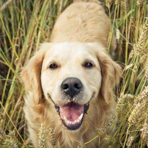 Comment réduire l'empreinte écologique de vos animaux