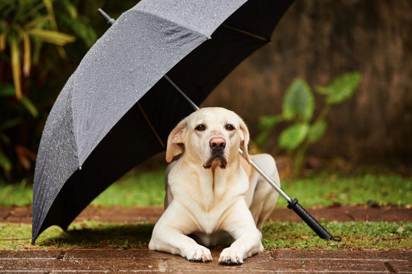 Nous, les chiens, préfèrons rester à l'intérieur