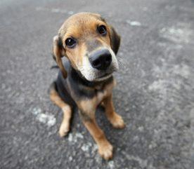 Conseils pour aider les chiens qui sont au régime