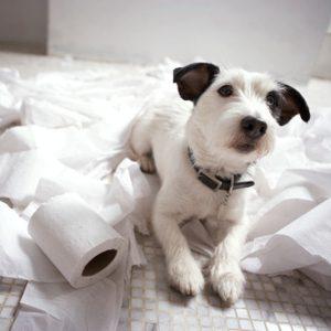 10 trucs infaillibles pour dresser votre chien