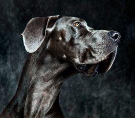 7 moyens de prévenir l'obésité chez les chiens