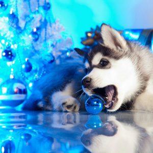 Cadeau pour animaux