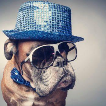 10 choses que vous ne savez pas sur les chiens