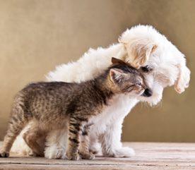 1. Les chiens facilitent la communication.