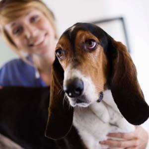6 vaccins dont votre chien peut avoir besoin
