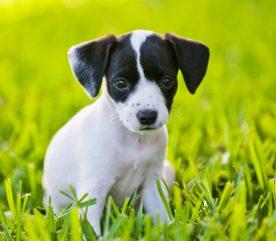 2. Les chiens sont sensibles.