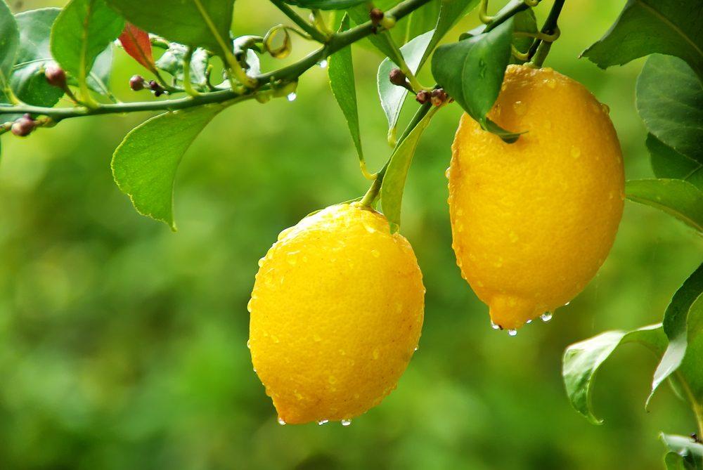 Lemon is an effective natural degreaser