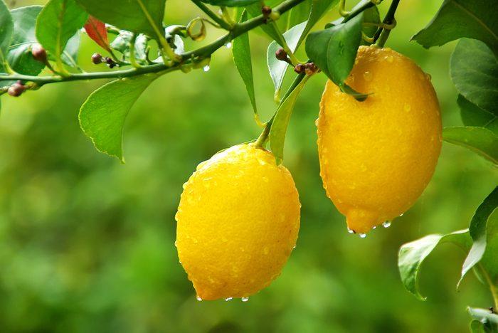 Le citron est un dégraisseur naturel efficace
