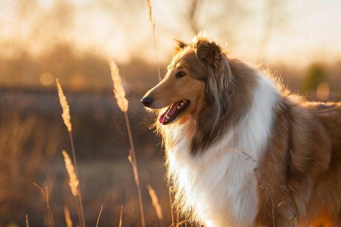 Les meilleures races de chiens pour la famille.