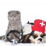 8 conseils vétérinaires pour le bien-être de votre animal de compagnie