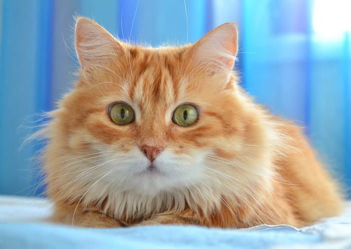 3. Comment est la personnalité des chats roux?