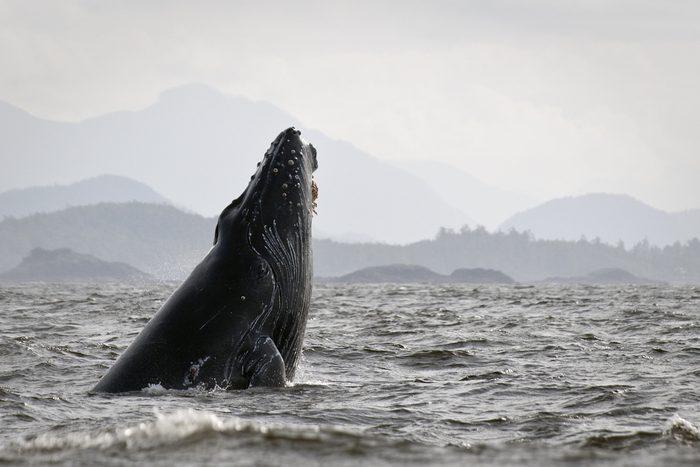 Le courant marin le plus fort se trouve en Colombie-Britannique au Canada.