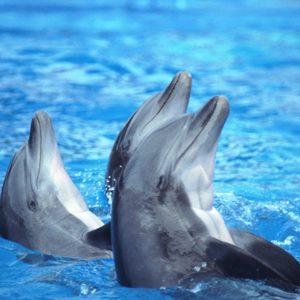 1. Les dauphins de la Marine américaine