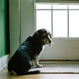 4. Les petits conforts de son foyer