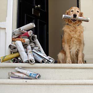 1. Un chien zélé