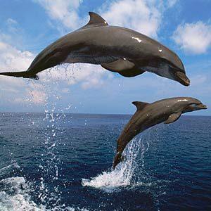 3. Le dauphin voit au moyen de sons