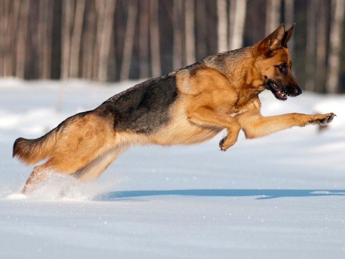« Va la chercher! » : Un chien héroïque sauve la vie d'une fillette