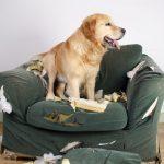 10 trucs de base pour dresser son chien