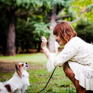 6 trucs pour choisir une école de dressage pour votre chien