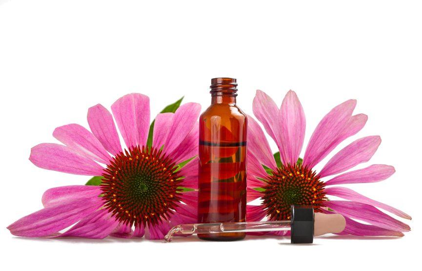 L'échinacée aide à diminuer les symptômes de la grippe et du rhume.