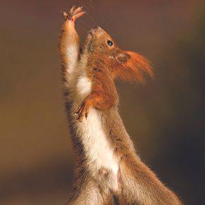 2. Écureuil