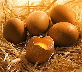 Mythe : les œufs sont dangereux
