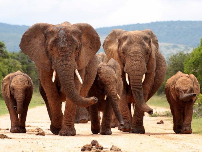 Mourir pour de l'ivoire