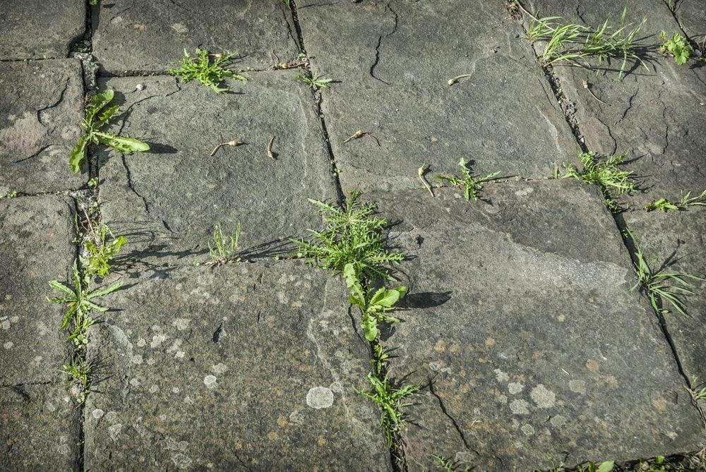 6 herbicides maison tuer les mauvaises herbes sans tuer - Comment desherber avec du vinaigre blanc ...