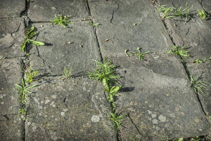 Pulvérisez les mauvaises herbes avec du sel pour les éliminer