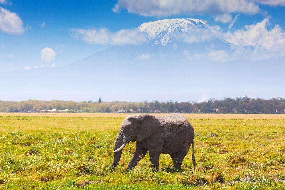 La randonnée du mont Kilimandjaro est l'une des plus populaires au monde.