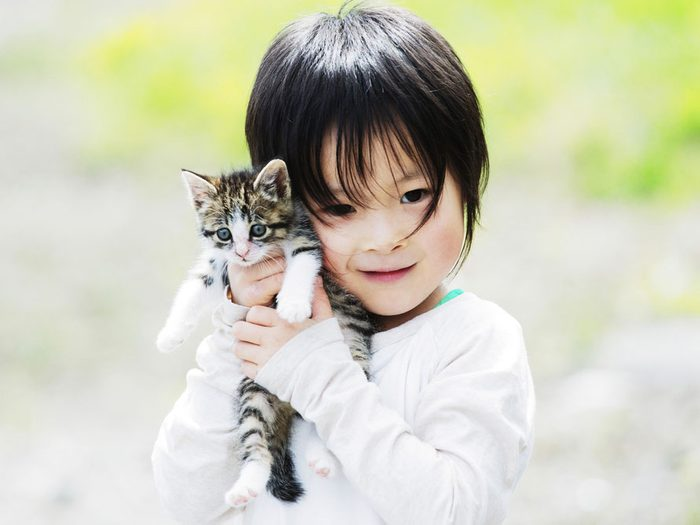7. Les chats ont besoin de confort