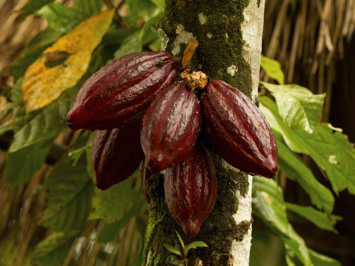 2. Équateur: la Route du Cacao