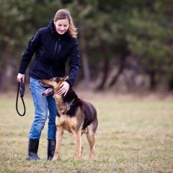 5 erreurs à éviter quand on dresse son chien
