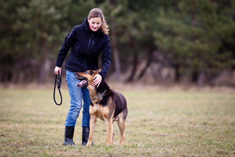 Dresser son chien : 5 erreurs à éviter
