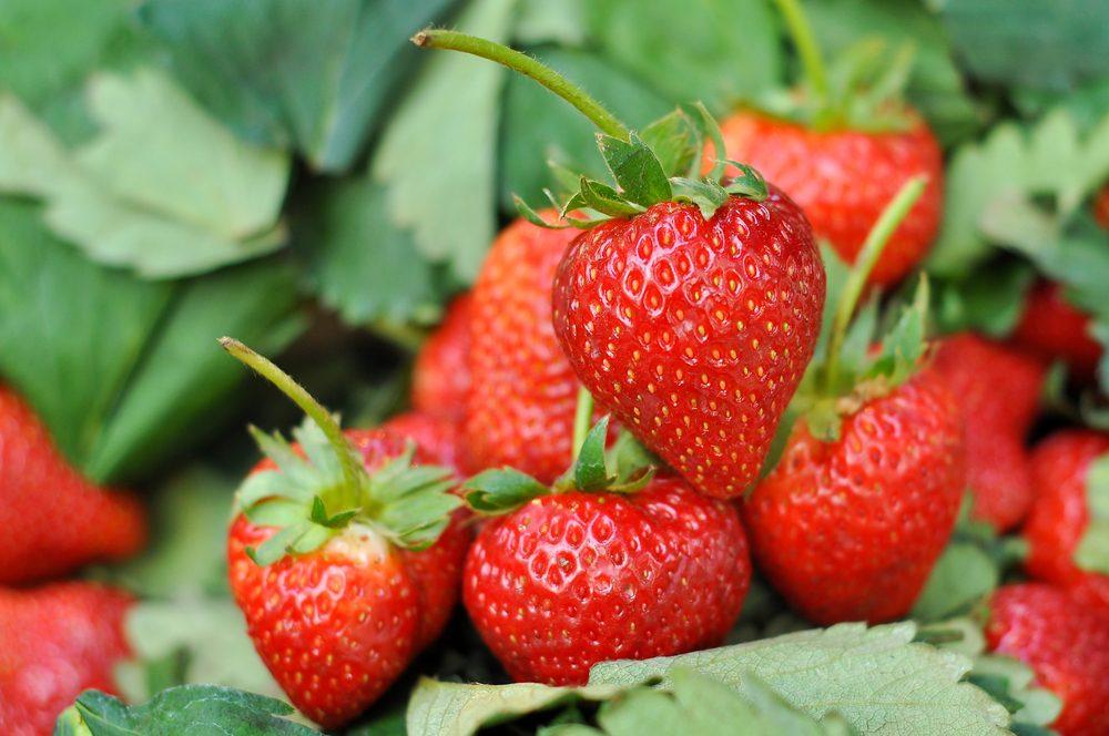 Le sel d'epsom permet de cultiver les fruit et légumes plu savoureux.