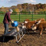 7 options de vacances à la ferme
