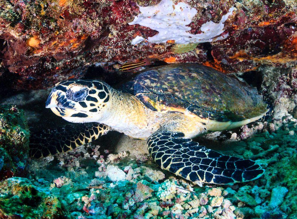 3. L'île de Bornéo